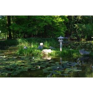 Szegedi  Tudományegyetem Fűvészkertjének japánkertje
