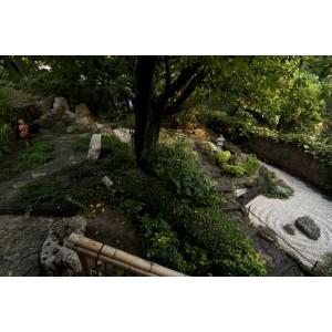 Hanami  north garden- summer 2011