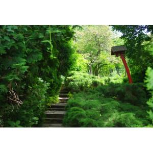 Kolozsvári Japanese garden