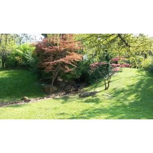 Fővárosi Állat és Növénykert Japánkertje