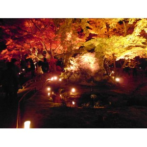 Hogonin garden-Kouyou 2011