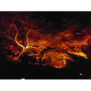 Japan 2012 at night