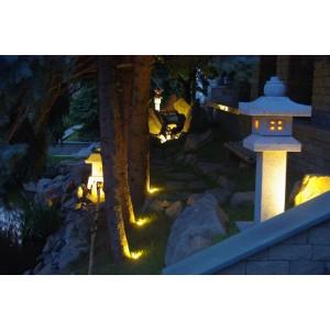 Forest garden at night