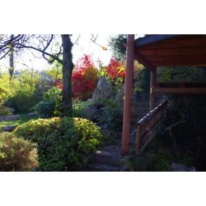 Hanami east garden -Atumn 2011