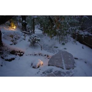 Hanami  north garden-winter 2010
