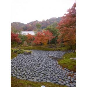 2011 Hogonin garden-Kouyou